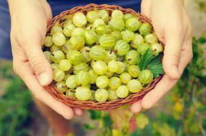 Just past the top 10: Gooseberries.